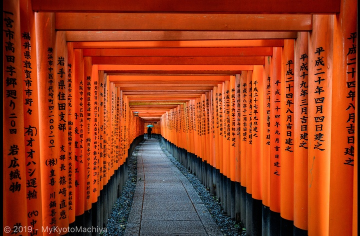 The torii trail of the Fushimi Inari Taisha Shrine, selected by foreign tourists as the #1 attraction of Japan. A mere three stops by train from the house!