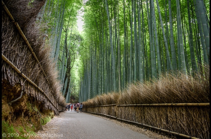 The famous Bamboo Grove in Arashiyama is another famous iconic view of Kyoto.